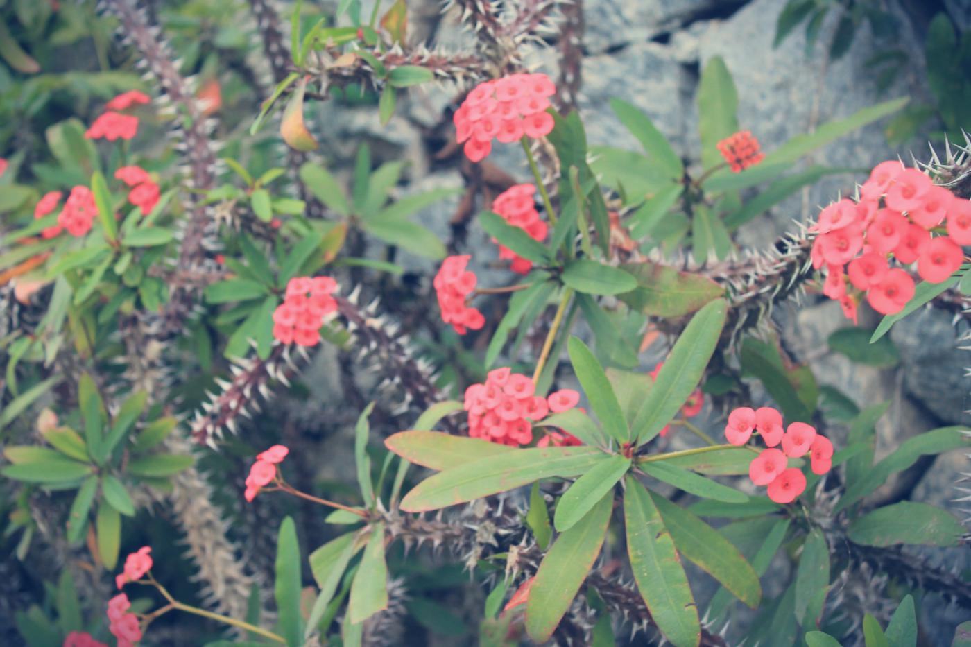 fleurs tropical bresil