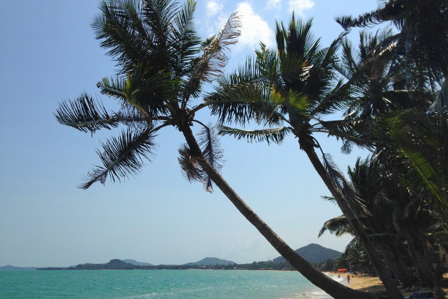 maenam beach cocotier