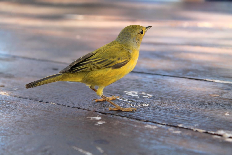 petit oiseau tropical