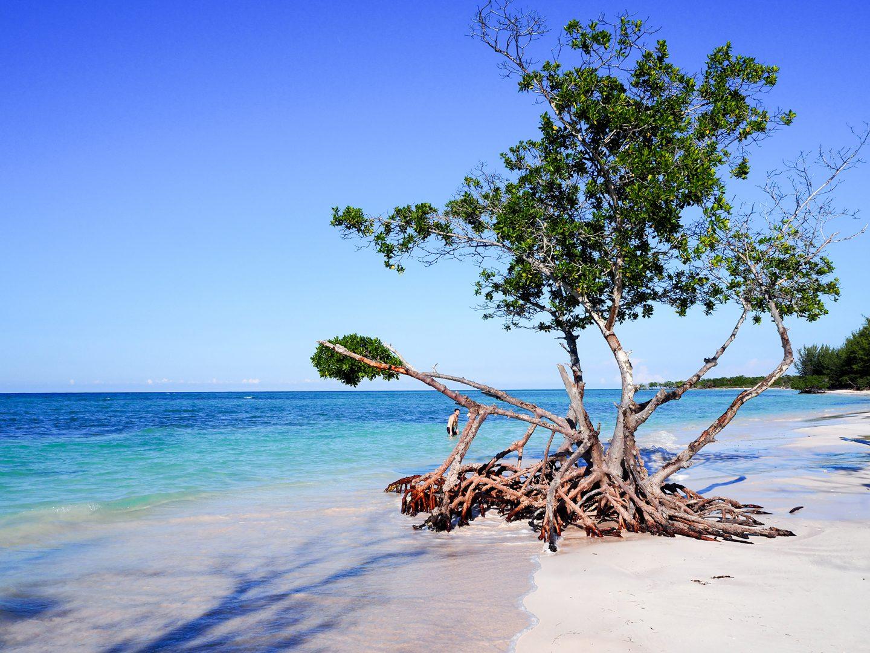 Cuba : Cayo Jutías (Viñales, Pinar Del Rio)